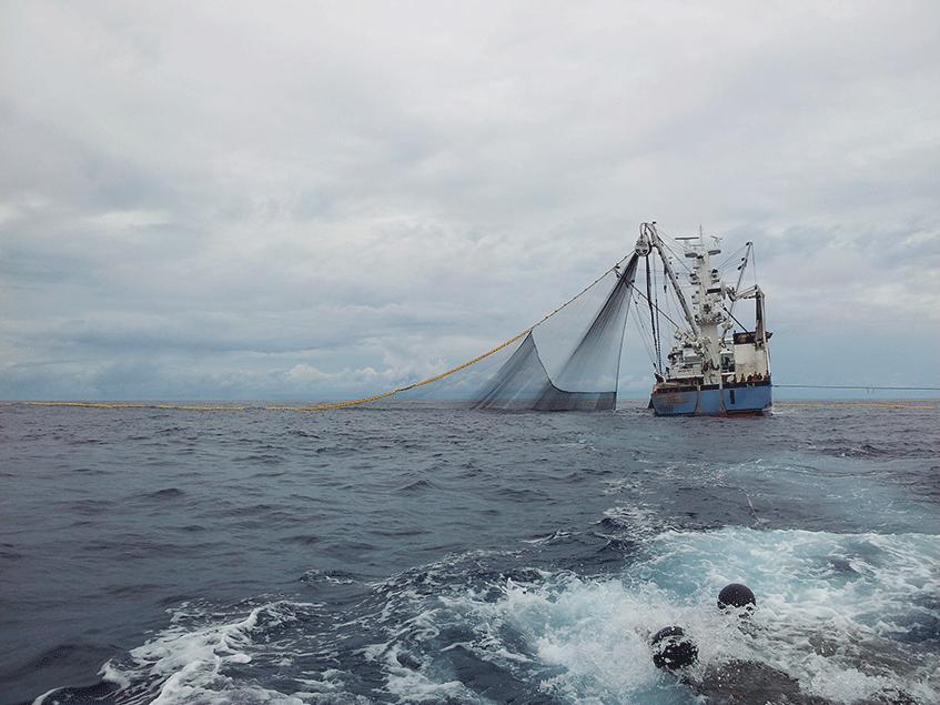 Barco pesquero en el mar en un contexto de pesca sostenible