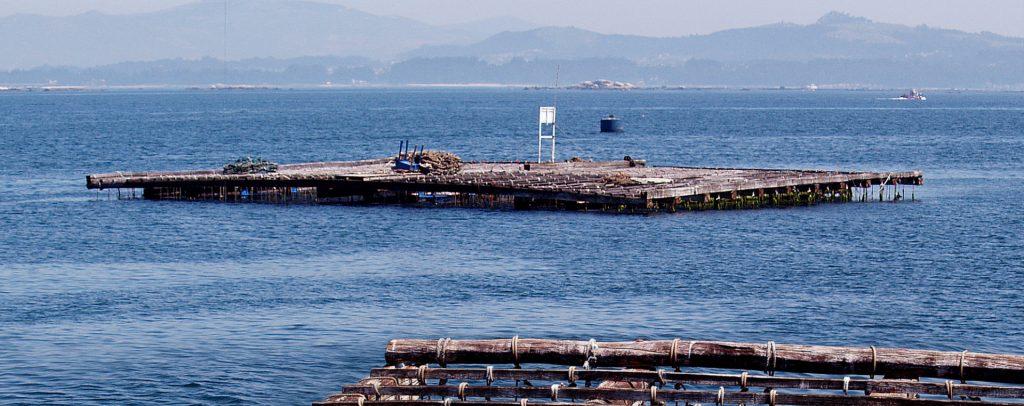 La marea roja en Galicia es un fenómeno natural que afecta a los mejillones